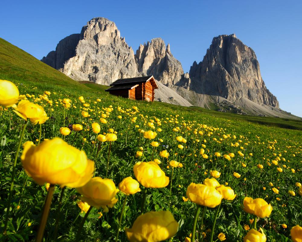 Fiori in montagna